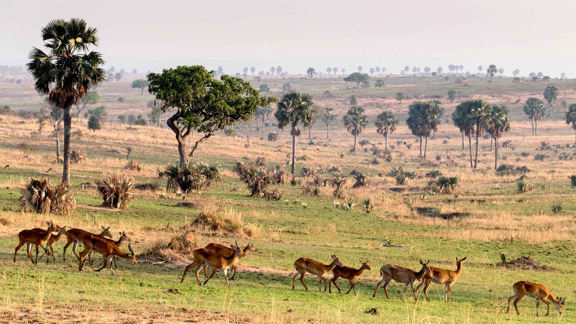9 Days / 8 NIGHTS Rwanda – Uganda safaris