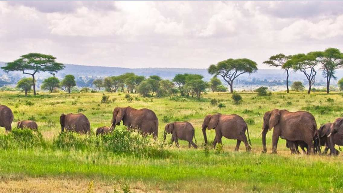 13-DAYS  WILDLIFE AND LUXURY KENYA TOUR