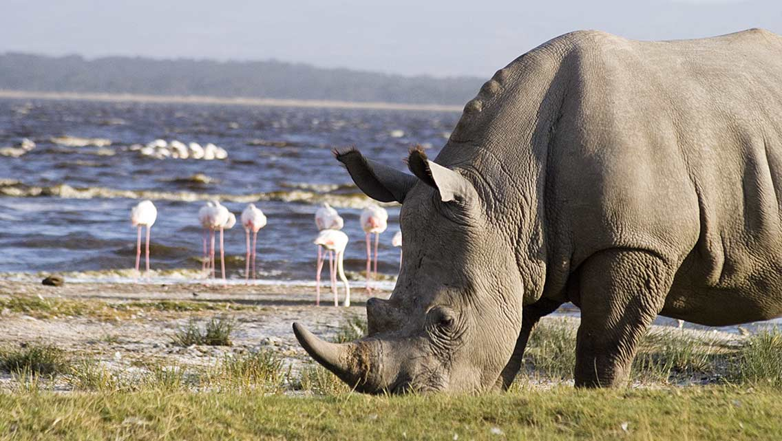 10 DAYS PRIVATE KENYA TOUR