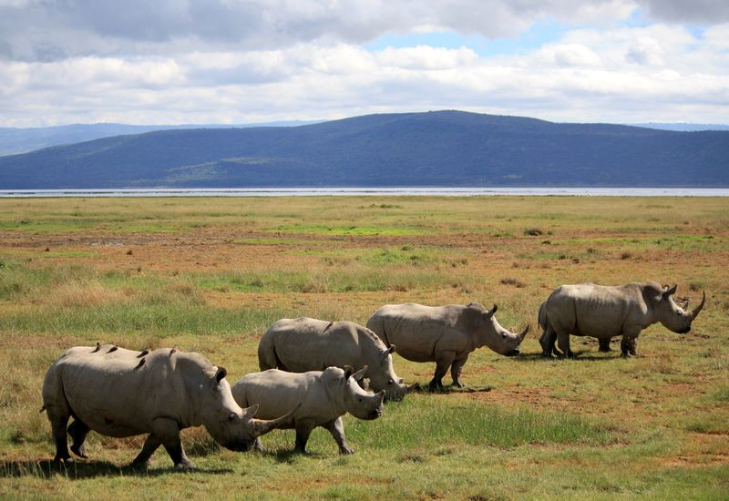 7DAYS MAASAI MARA/LAKE NAKURU/AMBOSELI NATIONAL PARK  ADVENTURE (Budget)+2NIGHTS NAIROBI ACCOMMODATION.